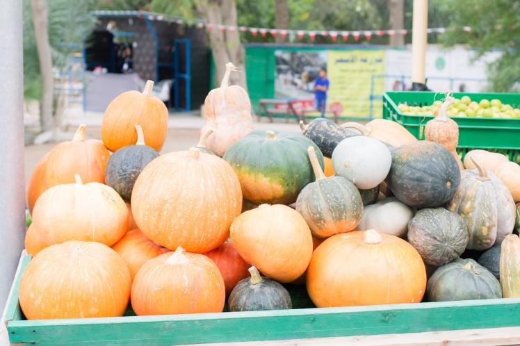 Farmers Market-11