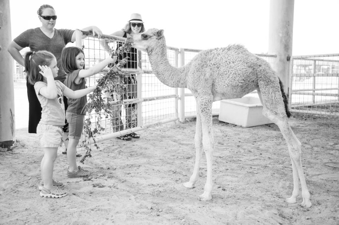 Day 33- Camel Farm-14